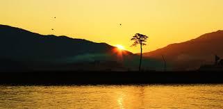 Lone pine tree symbol of hope in Japan tsunami city.