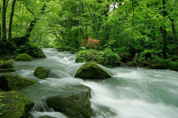 Oirase Stream - Picturesque mountain stream